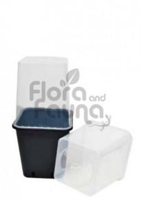 Klosz ochronny dla sadzonek i młodych roślin do doniczki 11L